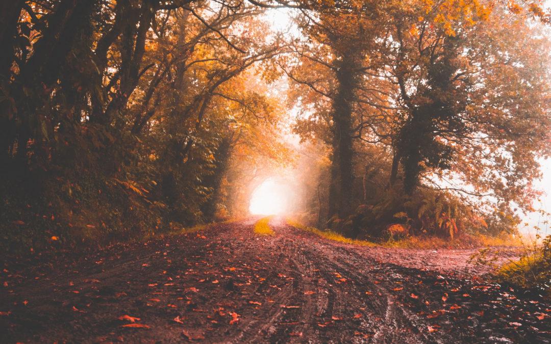 Autumn Reverie